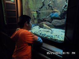 Shedd Aquarium