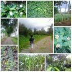 Walk around the farm