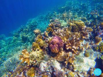 Lusong Coral Garden 2
